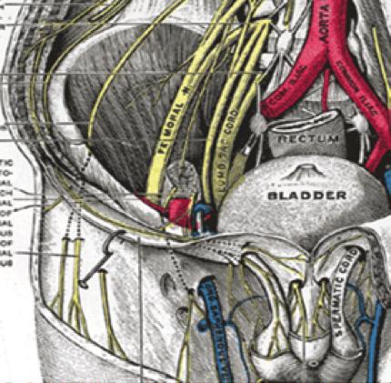 Anatomische Grundlagen für Blockaden der unteren Extremität